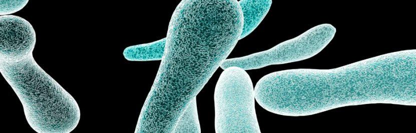 Pałeczki grożnych bakterii Legionella