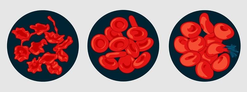Vliv osmotického tlaku na lidské červené krvinky